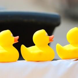 duck-meet-4818719_1920